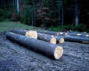 Value wood logs